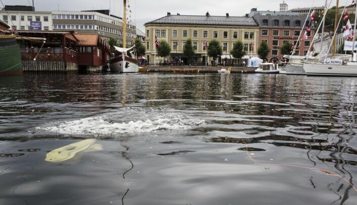 Blueyes undervannsdrone Pioneer vaket i havnebassenget under Arendalsuka. Foto: Per-Ivar Nikolaisen