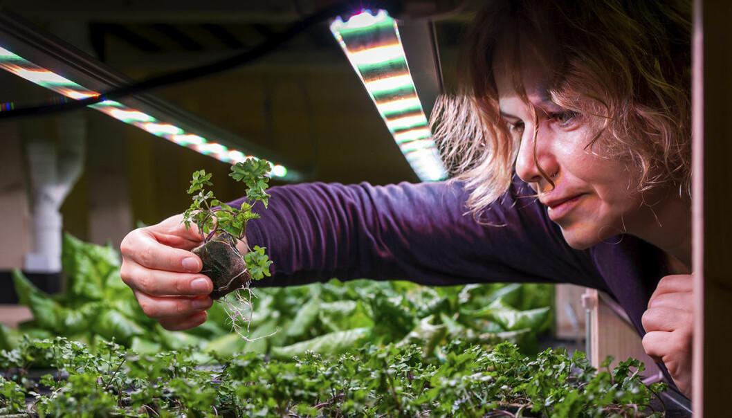 Olga Popovic, sjefsagronom i BySpire, har ansvaret for å følge opp at dyrkingen av plantene går riktig for seg.