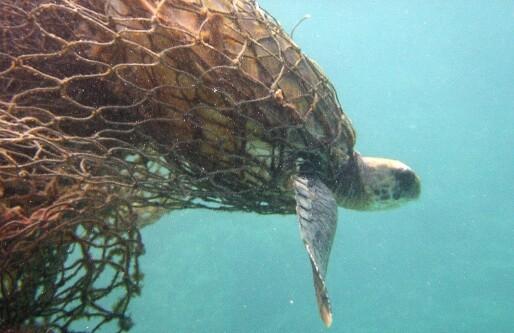 Ny norsk teknologi skal redde dyreliv fra skadelig fiskegarn