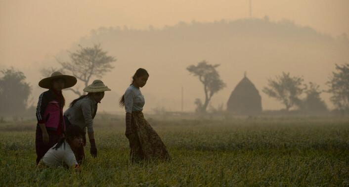 Myanmar er i utvikling — og tradisjonelle jordbruksområder er i ferd med å få asfalterte veier, elektrisitet, internett og andre moderne fasiliteter. Naefos og Plug the Sun vil være en del av den utviklingen. Foto: AP Photo/Gemunu Amarasinghe