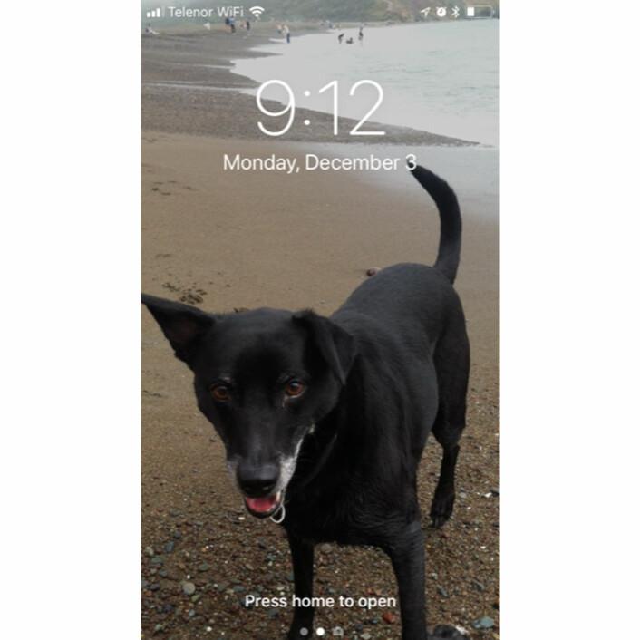 Kirsten McLoud sin hund, foreviget på stranden.