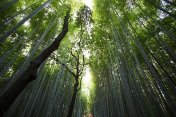 Bedrifter må utvikle økosystem-strategier lik dem i naturen. Illustrasjonsfoto: Unsplash