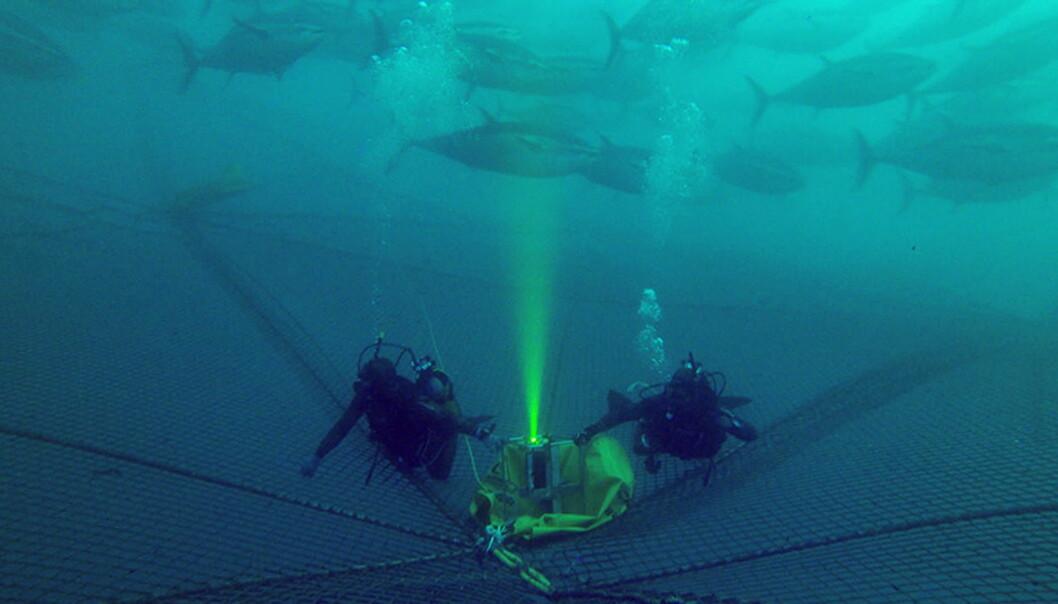 Det avanserte 3D-kameraet UTOFIA (Underwater Time Of Flight Image Acquisition) er utviklet for bruk under vann, men dets egenskaper kan nå føre til at det blir sendt til verdensrommet.