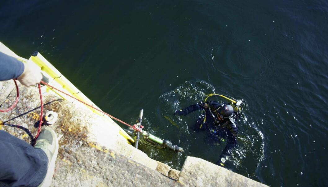 Dykker Paul Arne Nesbø henter opp en Zvipp-sparkesykkel fra Tjuvholmen. Foto: Torill Henriksen