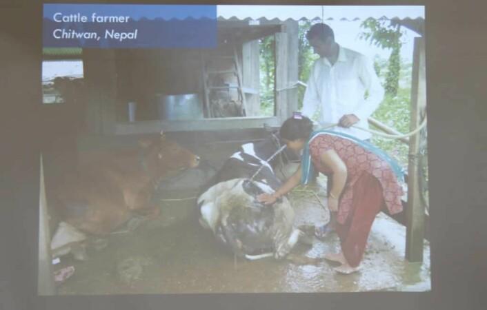 Ved å installere solcelle-anlegg på denne gården i Chitwan i Nepal, kunne de sette opp en vannpumpe som betydde at de slapp å måtte bruke mye ressurser på å hente vann. Det har medført en økning i melkeproduksjonen på 20 prosent.