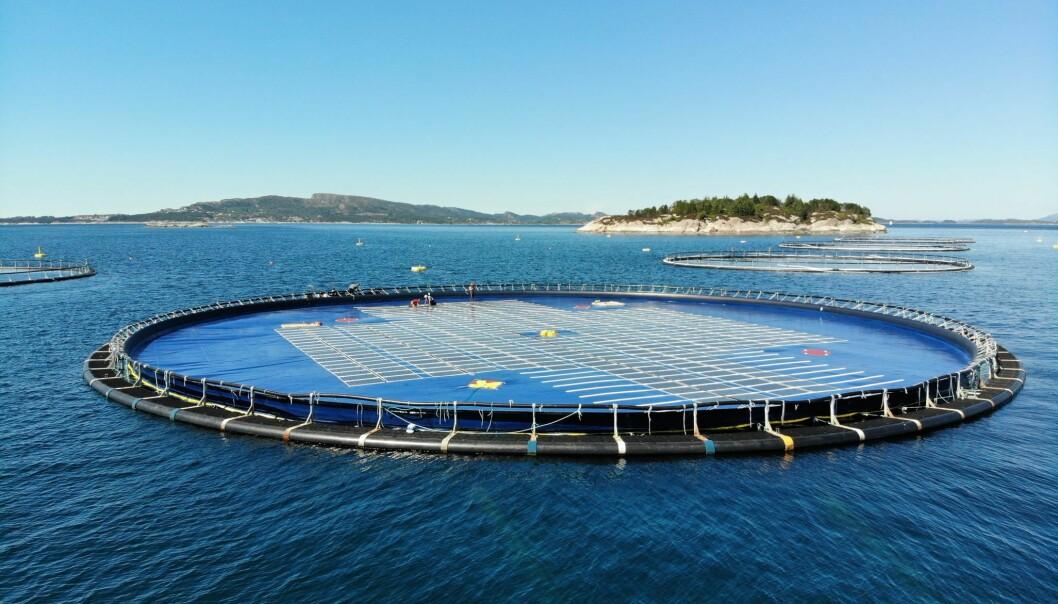 Ocean Sun har klart å kombinere solenergi med maritim teknologi på en genial måte. Foto: Ocean Sun.