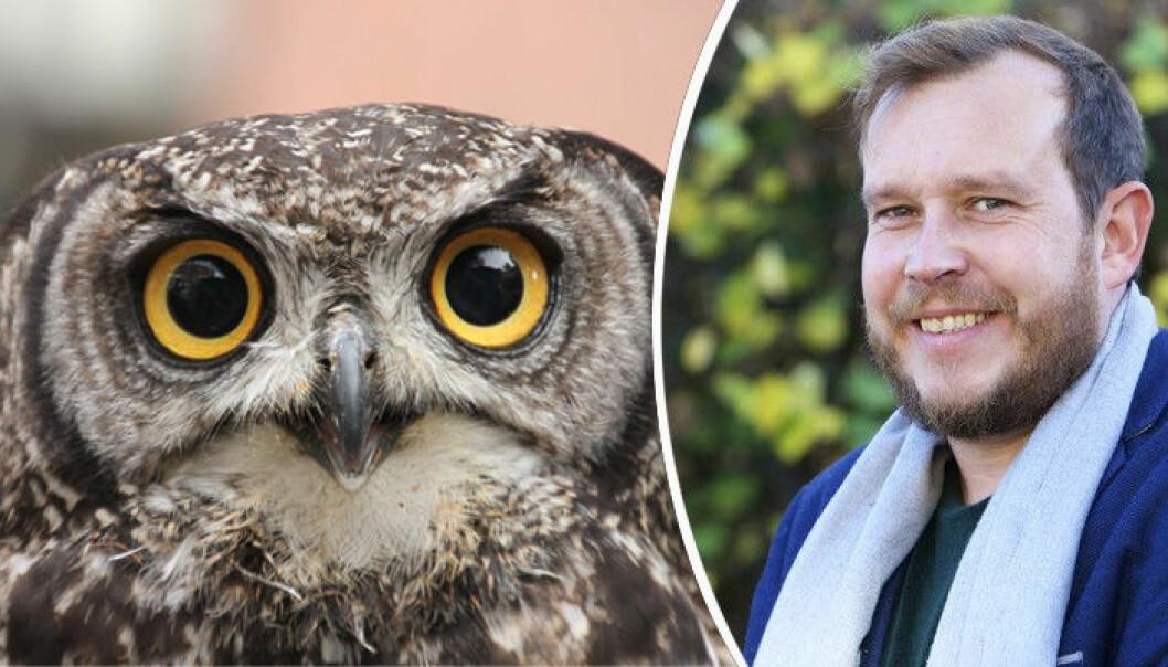 Innovasjon Norge-sjef Håkon Haugli utpeker ugla til årets dyr, grunnet nattsynet. Riktigere hadde det vært å gi tittelen til en forspist måse, mener Jørn Haukøy.